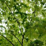ポケモン聖地代々木公園は安定して出現する